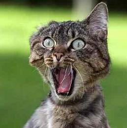 freak-out-cat
